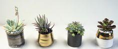 The Succulents - four individual succulent pots delivered in a handmade wooden box Succulent Pots, Succulents, Planter Pots, Handmade Wooden, Wooden Boxes, Flower Arrangements, Flowers, Plants, Wood Boxes
