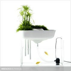 Floating Garden (natural aquarium filtration system) Benjamin Graindorge and Duende Studio