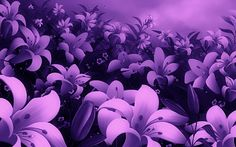 ZNS Violet Flowers Wallpapers Violet Flowers HD Pics