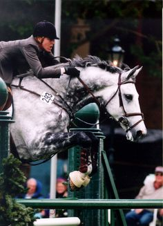 Hunter jumper eventing horse equine grand prix dressage equestrian https://feelmyvibe.com/collections/all