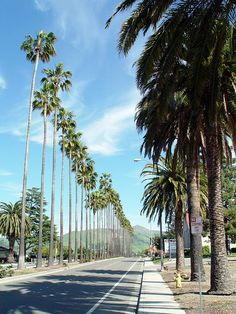Fremont, California - Palm Trees, before Fremont California, California Palm Trees, California Dreamin', Yosemite National Park, National Parks, Redwood Forest, On The Road Again, City Of Angels, Adventure Is Out There