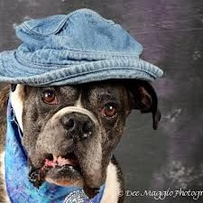 Old boxer - I rescue a human today. This is so true. Sometimes they rescue us every bit as much as we rescue them. Please consider adopting - whether from a rescue group or from a shelter, you're still opening up a space for one more to have a chance. ♥
