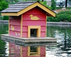 duck housing - Keep ducks if you have a pond....they will clean out all the pond weeds & fertilize