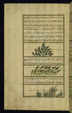These illustrations depict sweet basil (rayḥān), rhubarb (rībās), and Indian spikenard (sādaj). Wonders of Creation  by Qazwīnī 1293 was translated to Turkish in 1717  completed by Rūzmah-ʾi Nāthānī - W659