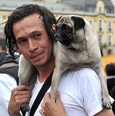 The pug just made him ten times hotter...in my mind he's a Brit or Irish and has a band. Lol