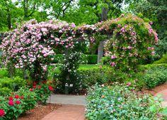 Roses, Garden, Dallas Arboretum, April In The Garden, Spring In The Garden