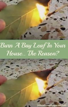 Burn A Bay Leaf In Your House.. The Reason?