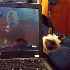 Erro 404: Illuminati? Os gatos é que vão dominar o mundo!