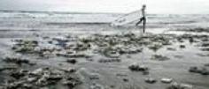 Plastik Meerestiere Müll Adidas Nachhaltigkeit