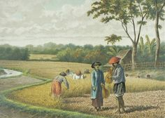 lithograph by Josias Cornelis Rappard - Panen padi di sawah, Jawa. Indonesian Art, Dutch East Indies, Dutch Colonial, Old Paintings, Unique Art, Vintage Posters, New Art, Past, Scenery