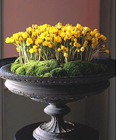 Enormous black urn filled with crocus and moss. Enormous black urn filled with crocus and moss. Place the urn on top of a table for a beautiful statement piece in a foyer or living room. Garden Urns, Garden Planters, Deco Floral, Arte Floral, Gardening Supplies, Container Plants, Container Gardening, Container Design, Ikebana