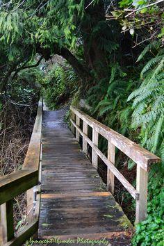 tarynthunder:    Forest Bridge