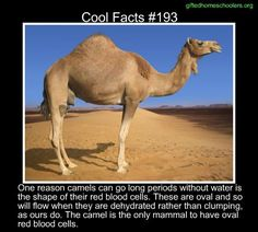 Cool facts #193  http://www.asknature.org/strategy/b69c5de2019f07f6069a3fd7fb224ea1