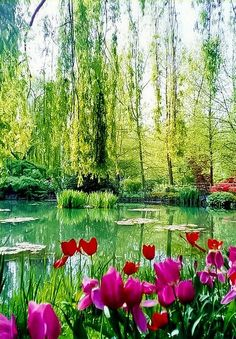 Monet's Garden, Vernon, France. So beautiful, would love to go back one day.