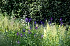 The Laurent-Perrier show garden at the RHS Chelsea Flower Show 2014 / RHS Gardening (Lupins and Irises)