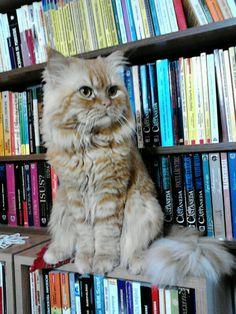 "** ""Me justs seen customer slides a book under jacket."""