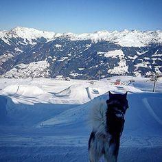 #good #day #@ #kaltenbach #snowpark #freestyle #slopes #zillertal #zillertalarena #snowboard #snowboarding #snow #mountainlove #góry #7hillz #ski #skiing #winter #winterwonderland #wintersport
