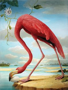 "Birds of America- Greater Flamingo . Image approx. 20""x16"", paper size 24""x20"""