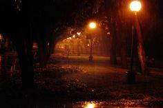#nature #park #light #night #rain
