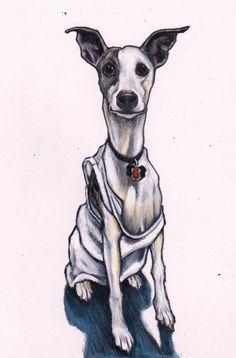 WHIPPET ART...Ash the whippet. Custom pet art. Colour pencil on white card https://www.etsy.com/listing/216347712/custom-pet-portrait-by-jim-griffiths?ref=shop_home_feat_1