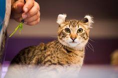 """""""O Grito do Bicho"""": Número de gatos no Brasil cresce mais que cachorro..."""