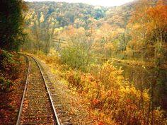 Autumn Train Maple Leaves
