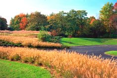 Ornamental Grasses Landscape Design.  Landscape Architectural Design.  Colorful Fall Colors.  Sustainable Design.  Ohio and Midwest.