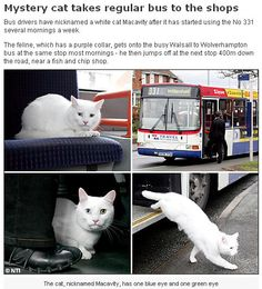 The cat takes the bus