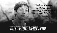 what's that wildorean eating? oh don't worry, it's just merlin