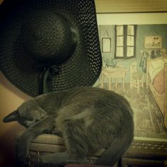 Coco & my hat