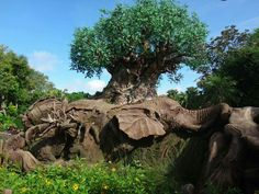 Disney's Animal Kingdom, Orlando Fl.