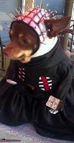 Stacey: This is my Little Hellraiser! This costume is one of a kind hand crafted from scratch. Cinnamon is wearing the Pinhead character from the horror movie, Hellraiser. I patiently glued...