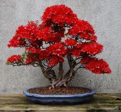 Red bonsai by Peter Krebы