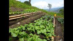 Características de la Agroecologia una Agricultura Más Sana - TvAgro por...