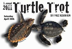 Mark your calendars for a good cause and learn about coastal Georgia Sea Turtles.