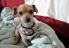 Cora at her foster mom's house. | 10 Of The Most Life-Affirming Dog Rescue Stories Ever
