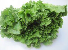 Andijvie, zelf gesneden van een verse krop, want dan bevat deze gezonde groente extra veel vitamine C