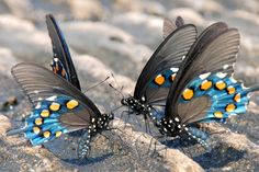 butterflies! photo by me :-)
