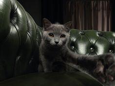 Read more: https://www.luerzersarchive.com/en/magazine/print-detail/animal-house-60582.html Animal House Tags: Young & Rubicam (Y&R), Milan,Vicky Gitto,Winkler+Noah,lorena Cascino,Animal House