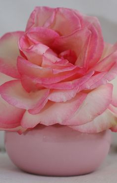 Gorgeous rose .