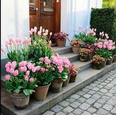 50 Stunning Spring Garden Ideas for Front Yard and Backyard Landscaping - Patio tuin - Tulips Garden, Garden Pots, Potted Garden, Container Plants, Container Gardening, Gardening Vegetables, Plant Design, Garden Design, Beautiful Gardens