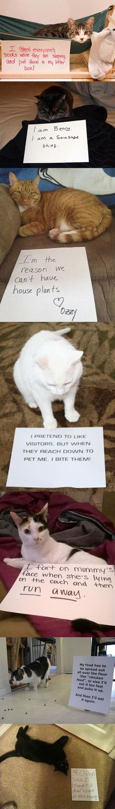 BEST Cat Shaming Hilarious Laughing Pictures