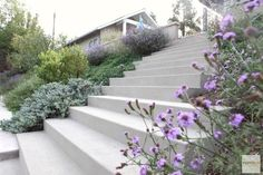 The vibrant California native foliage on this slope softens the clean, modern lines of the stairway. It also keeps the slope in place. Stairways, Outdoor Spaces, Oasis, Vibrant, Palette, California, Entertaining, Places, Modern