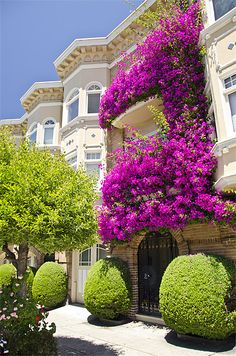 Flowered Balcony, San Francisco, California ... but the allergies might kill someone...