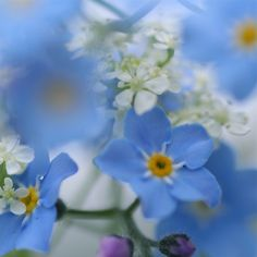 Love these forget me nots!