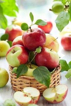 In the apple orchard. Fruit And Veg, Fruits And Vegetables, Fresh Fruit, Basket Of Fruit, Fresh Apples, Food Fresh, Growing Vegetables, Apple Tree, Red Apple