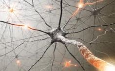 How do I know if I have Pudendal Neuralgia or Pudendal Nerve Entrapment?