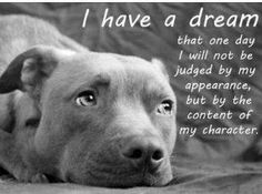Pitbulls: I have a dream...