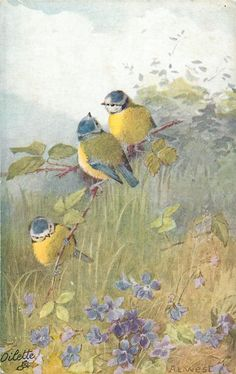 Three bluetits on branch over violets - Artist: A.L. West