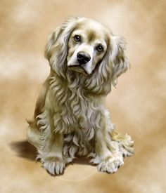 Toby Digital Art by Barbara Hymer - Toby Fine Art Prints and Posters for Sale Black Cocker Spaniel, American Cocker Spaniel, Cocker Spaniel Puppies, Golden Retrievers, Cute Puppies, Cute Dogs, Cockerspaniel, Dog Artwork, Dog Paintings